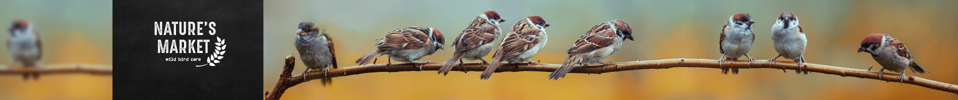 Bird Suet Feed