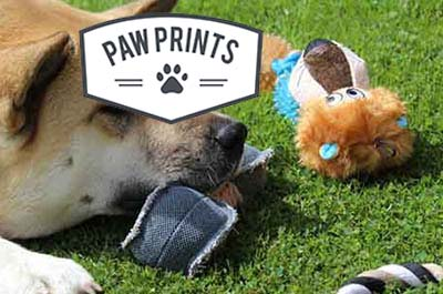 Paw Prints Pet Care