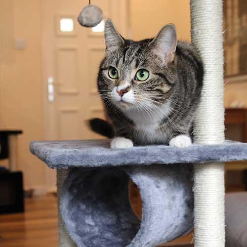 cat_post