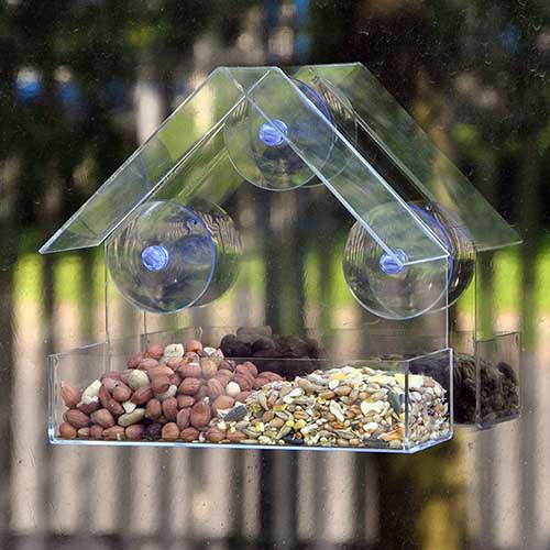 window_bird_feeder