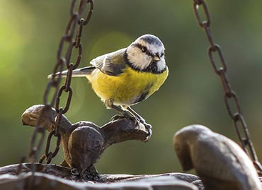 6 Top tips for Caring for the Birds this Winter