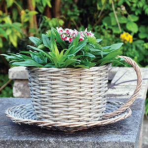 Wicker Tea Cup Planter